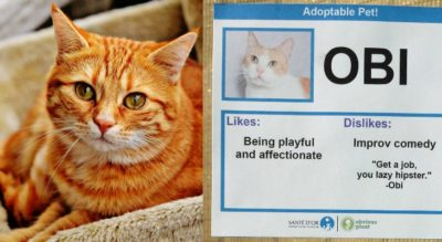 Activist Gives Cats Bizarre 'Likes' And 'Dislikes' To Help Them Get Adopted