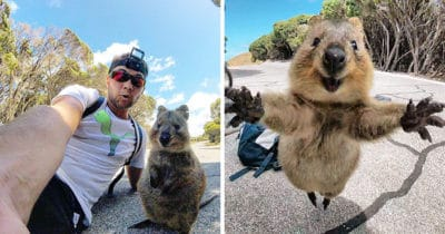 Cyclist Captures Adorable Photos After Wild Quokka Refuses To Leave Him Alone