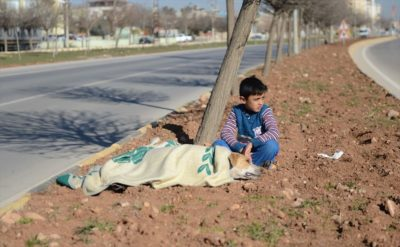 8-Year-Old Refugee Comforts Injured Stray Dog Until Help Arrives