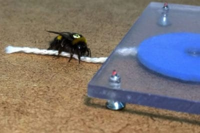 Bees Prove They Are Highly Intelligent To Amazed Scientists [Watch]