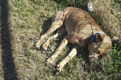 Rescuer Thought Abandoned Dog Was Dead—But Then He Took A Breath