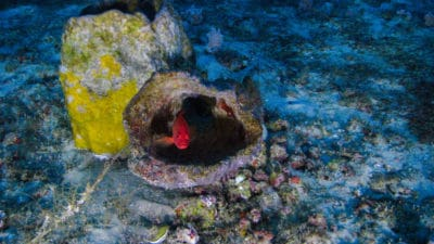 A First Glimpse Of The Newly Discovered Coral Reef