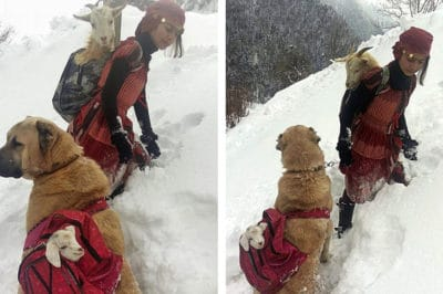 This Photo Of A Girl And Dog Carrying Goats Is Going Viral For The Best Reason