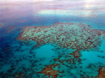 Ocean Oxygen Levels Have Dropped Causing Serious Implications For Mankind