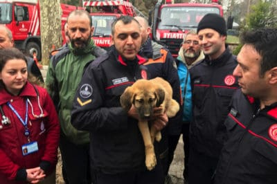 Firefighters Adopt A Puppy They Rescued After It Spent 11 Days In A Well