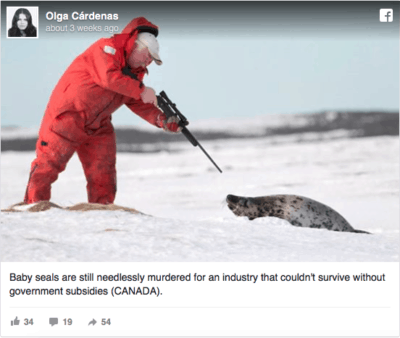 Hunters In Canada Are About To Slaughter Thousands Of Baby Seals (Graphic Images)