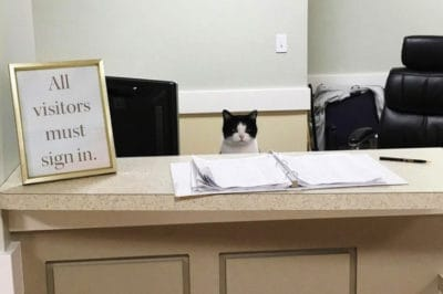 Stray Cat Snuck Into A Nursing Home And Landed An Adorable Job [Watch]
