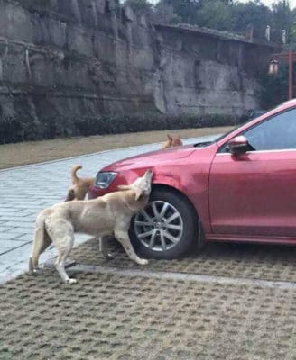 This Dog Got Revenge In The Best Way After Literally Being Kicked Out Of A Parking Spot