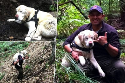 Blind Dog Was Missing For Over A Week Until Her Rescuer Carried Her To Safety