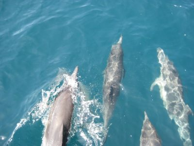 Highest Concentration of Mercury Ever Recorded Found In Florida Dolphins