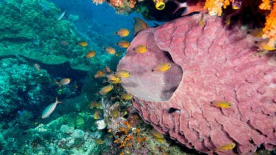 A Cruise Ship Just Destroyed The Most Biodiverse Reef On The Planet
