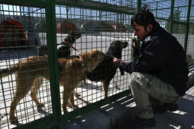 New Animal Shelter Is Changing The Way People View Dogs In Iran