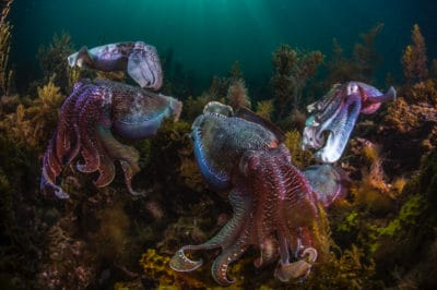 Octopus Populations Are On The Rise, But That May Not Be A Good Sign