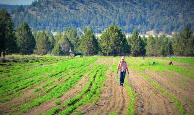 New Law Could Help Defend Oregon Farmers From GMO Contamination