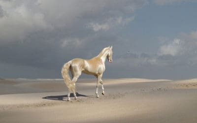 Meet The Stunning Animal Many Are Calling 'The Most Beautiful Horse In The World'