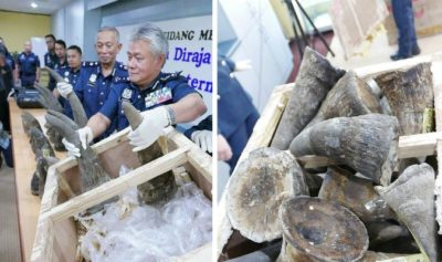 "Officials Discover 18 Rhino Horns Upon Inspecting Crate Labeled ""Artwork"""