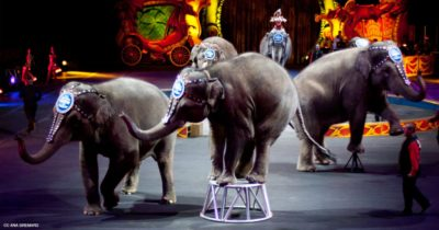 Victory! Los Angeles To Ban Use Of Wild Animals For All Entertainment