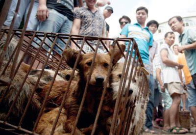 BREAKING: Taiwan Bans Slaughter Of Cats And Dogs For Human Consumption