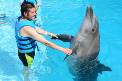 Major Travel Company Cuts Ties With All Animal Interactions After They Fail Welfare Standards
