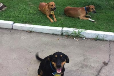 Inseparable Stray Dogs Land Jobs So They Can Stay Together Forever
