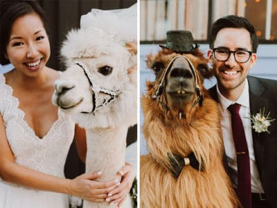 Newlyweds Who Hate People Can Now Invite Llamas In Bowties To Their Wedding