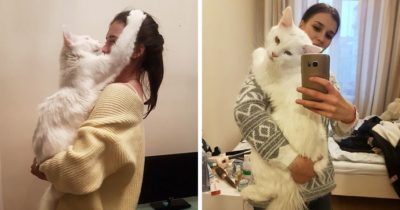 Giant Maine Cat Isn't Satisfied Until He's Received A Hug Every Day