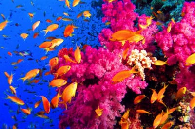The Latest In Green Burial: You Can Now Be Cremated Into Blossoming Coral Reefs