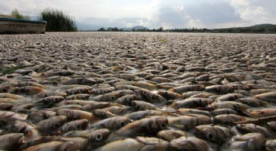 These Fish Are Starving At Sea And No One Knows Why