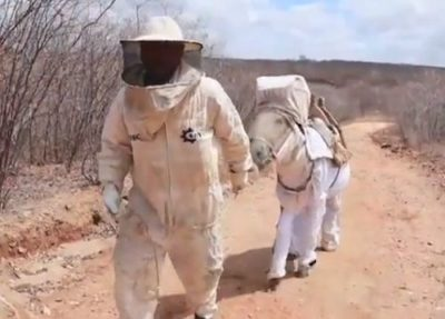 Beekeeping Donkey In Brazil Has The Cutest Suit To Keep Him Protected