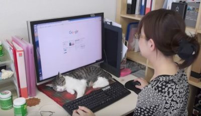 Japanese Firm Hires Office Cats To Reduce Workplace Stress