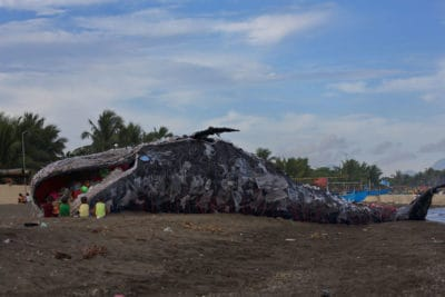 Giant 'Dead Whale' Is An Inescapable Reminder Of The World's Pollution Problem