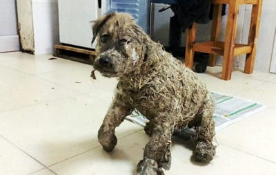 Puppy Turned Into Statue By Industrial Glue Undergoes Remarkable Transformation