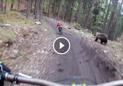 Extraordinary Footage Shows Angry Bear Chasing Mountain Biker On Trail [Watch]