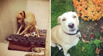 'World's Saddest Dog' Is Homeless Again And May Be Euthanized If New Home Isn't Found