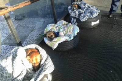 Bus Station Employees Do The Sweetest Thing After Seeing Cold Stray Dogs Outside
