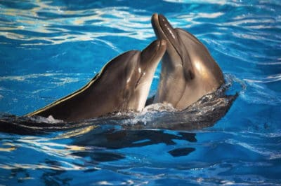 This Major Country Just Banned All Dolphin And Killer Whale Breeding