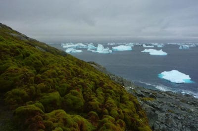 Antarctica Is Greening At An Alarming Rate, Scientists Point To Climate Change