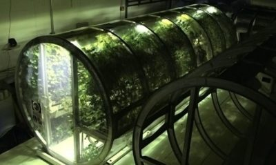 NASA Designs Inflatable Greenhouse To Feed Astronauts On Mars