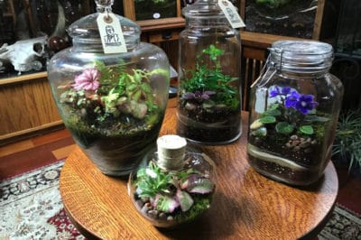DIY Terrarium For Plant Lovers Living In Tiny Spaces