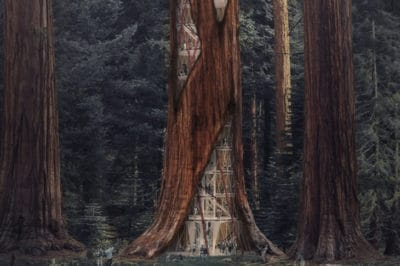 Designers Imagine Skyscraper Structures Inside Rotting Redwoods For This Cool Reason