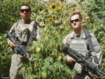 Incredible Photos Show US Military Walking Through HUGE Marijuana Field In Afghanistan