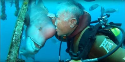 This Japanese Diver Has Been Visiting His Fish Friend For 25 Years [Video]