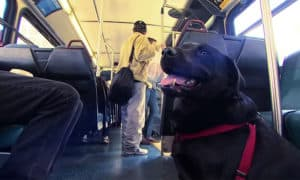 http://www.boredpanda.com/dog-rides-bus-seattle-eclipse/