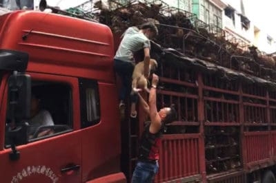 When People Saw A Truck Crammed With Dogs, They Knew Just What To Do…