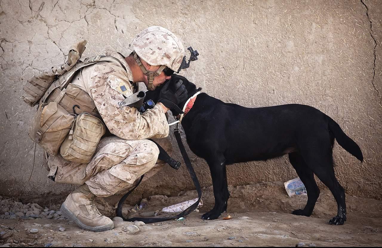 https://pixabay.com/en/soldier-dog-companion-service-870399/