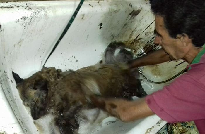 http://www.boredpanda.com/two-boys-save-dog-covered-tar-petro-argentina/