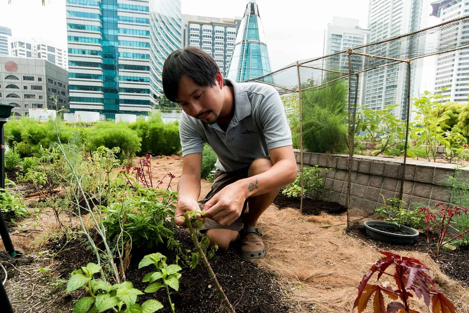 Singapore is converting vacant space into bountiful urban farms true activist for Indeed garden city ks