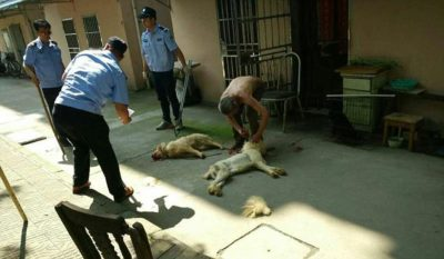 Elderly Man Looks On In Horror As Dogs Are Beaten To Death By City Officials