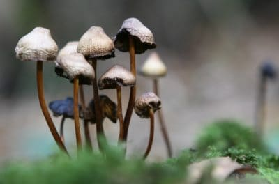 Legalization Of 'Magic Mushrooms' Might Be Just Around The Corner