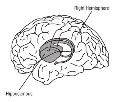 https://pixabay.com/en/hippocampus-brain-anatomy-medicine-148151/
